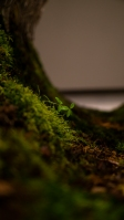 Moss barrel plant detail portrait