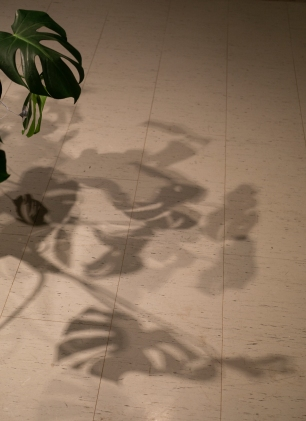 If plants could speak shadows